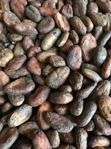 Какао-бобы Nacional Maranon