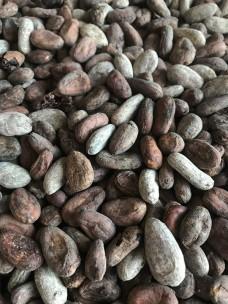 Какао-бобы Criollo Madagaskar