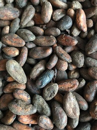 Какао-бобы India Kerala
